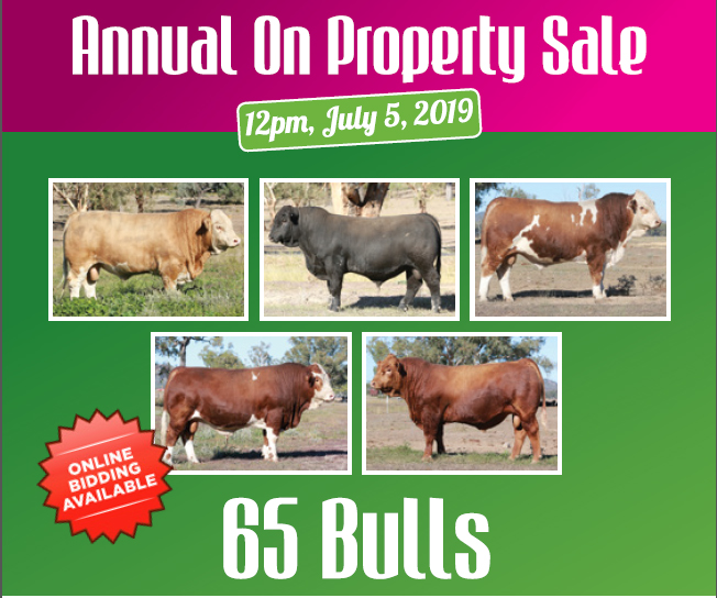 Lucrana Simmentals On Property Sale Catalogue