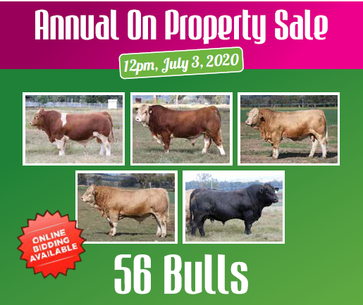 9th Annual Lucrana Simmentals on property sale